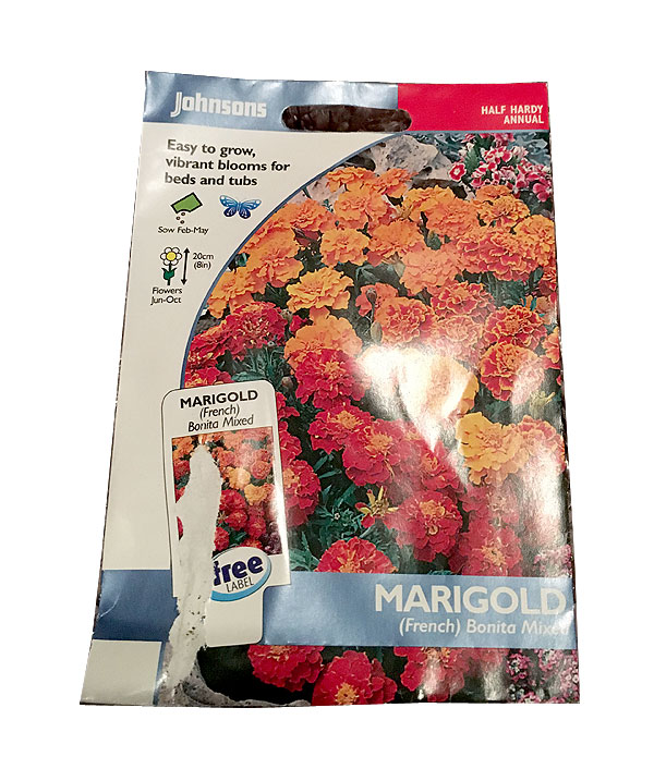 how to grow marigold plants from seeds