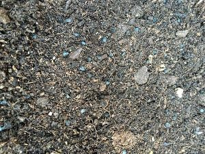 planting-spring-onion-seeds-in-compost